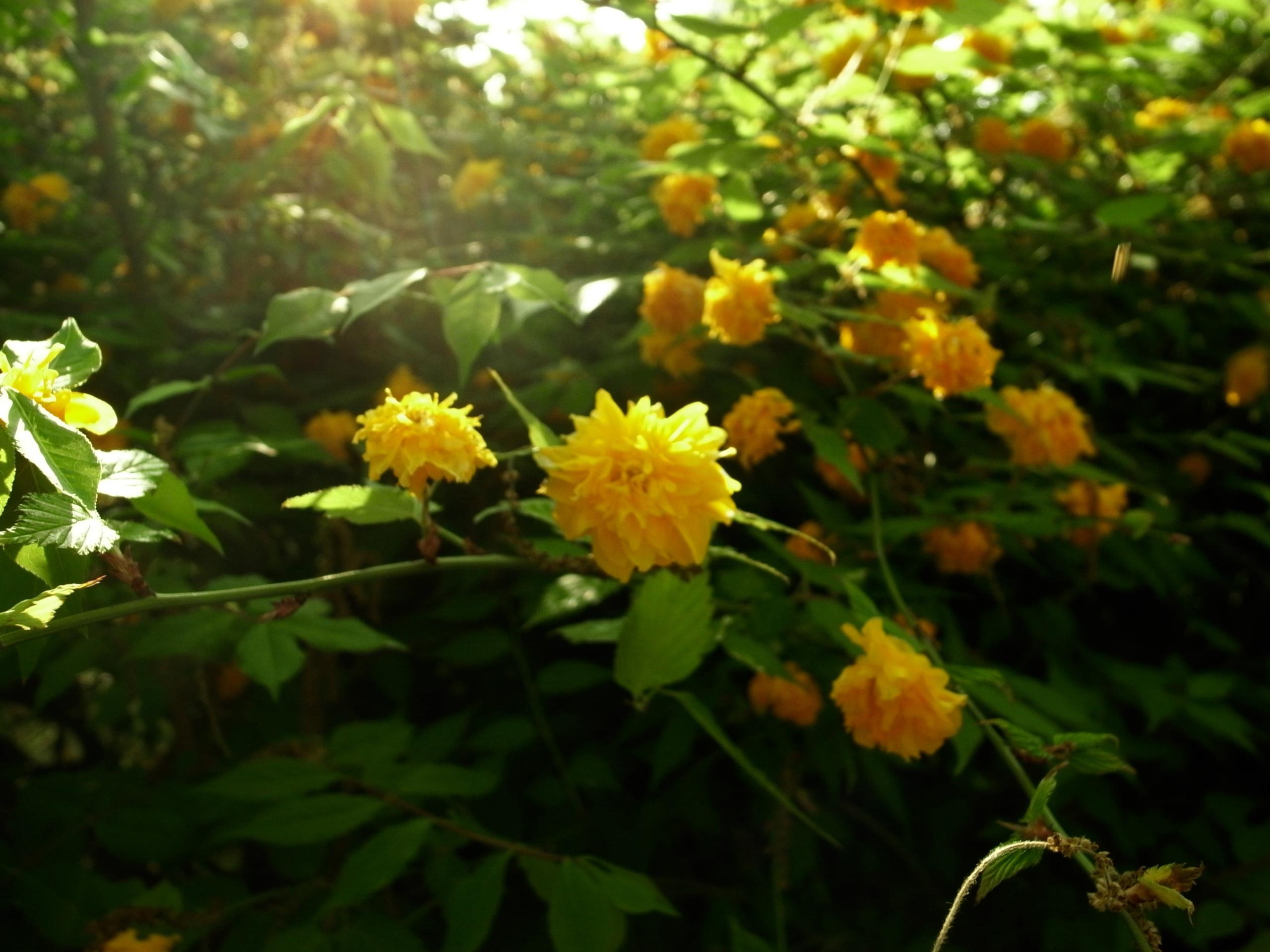 花と午後のひかり